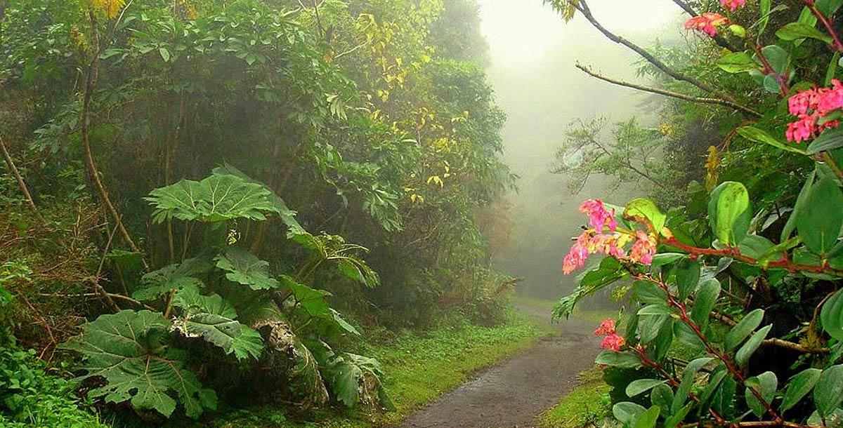 Aventure dans la Forêt Tropicale
