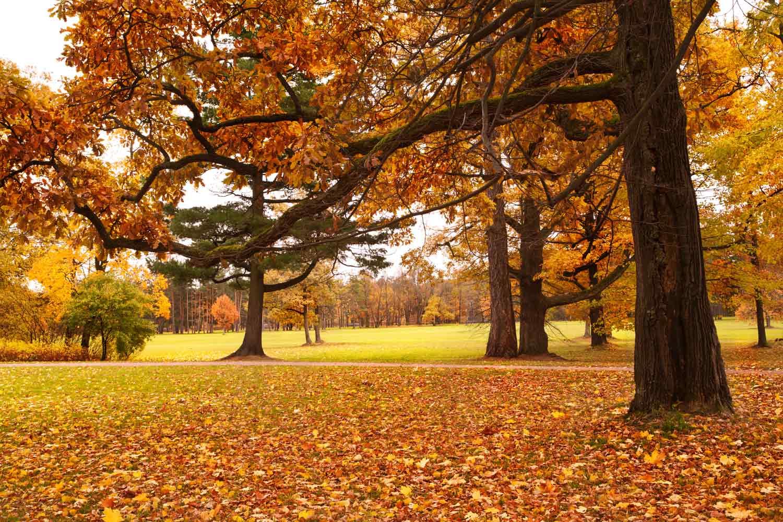 Visítanos en otoño