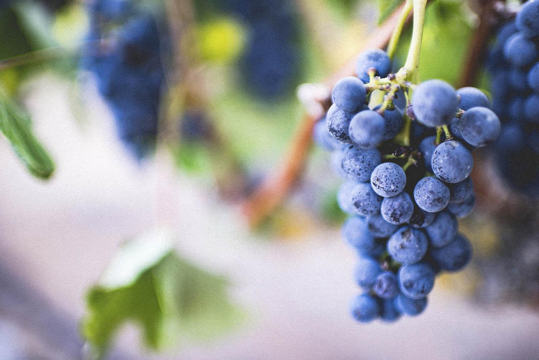 Weingutbesichtigung – Besichtigung ,Gelassenheit'