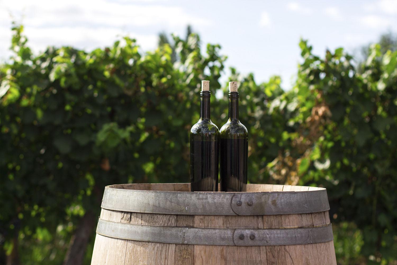 Weingutbesichtigung – Besichtigung ,Bewunderung'