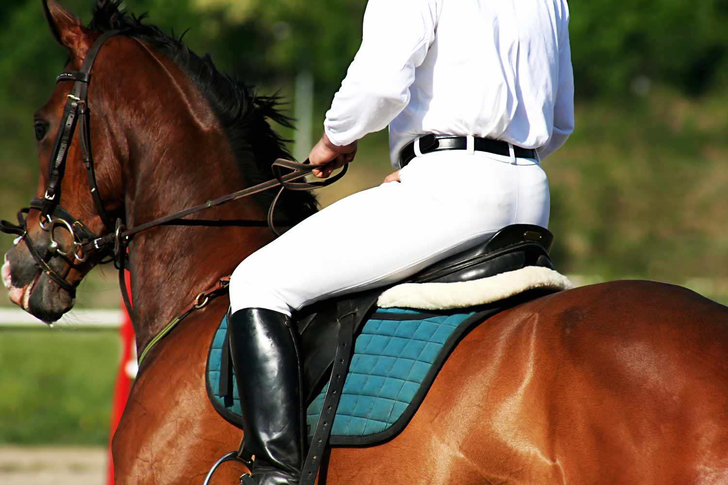 Horse Riding Routes & Relax
