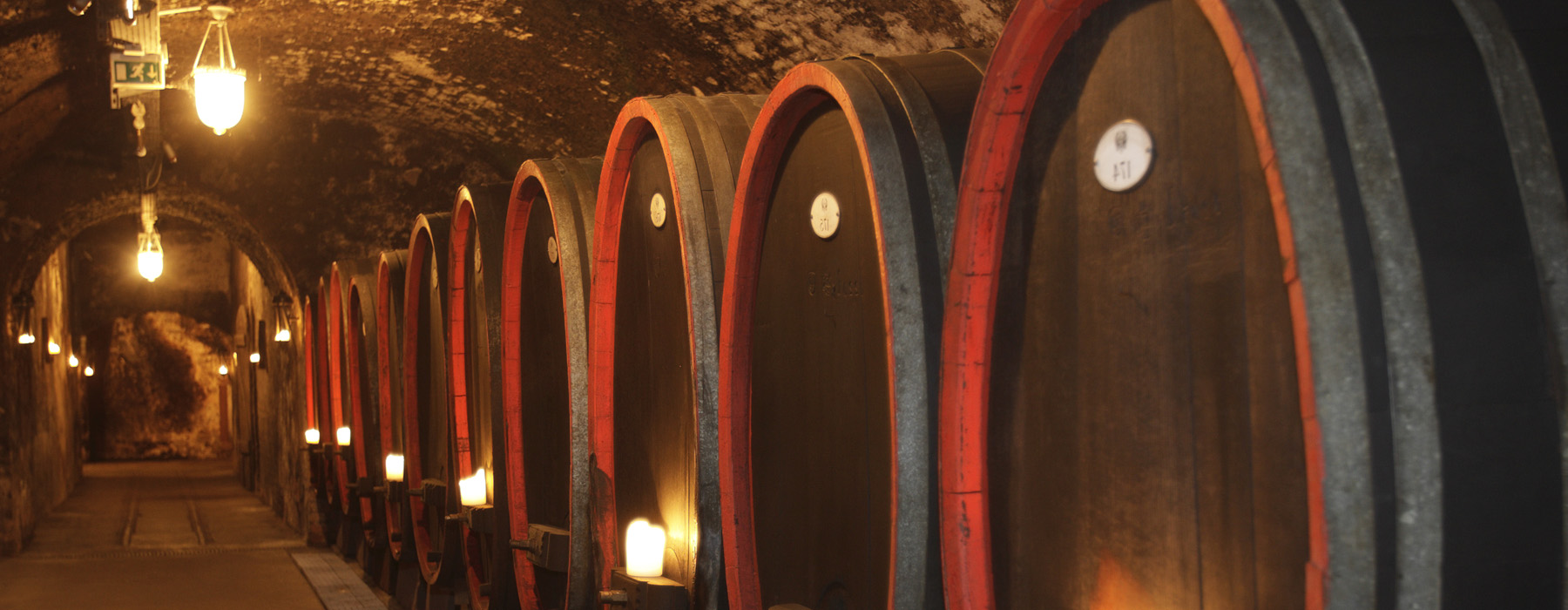 Guided tour to a winery