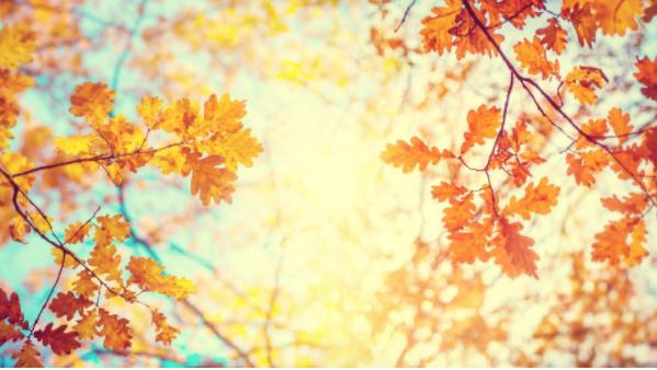 Especial entre semana otoño